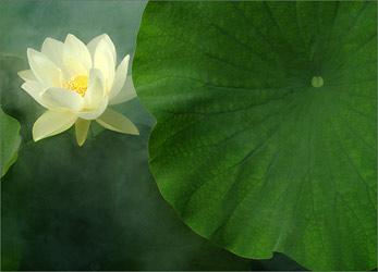 Day 4 - Pure Consciousness